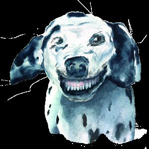 The Dalmatian Dog
